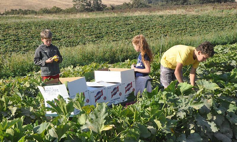 azure standard family farm