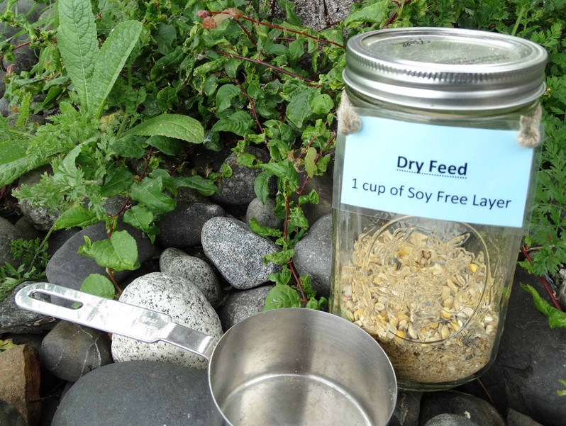 How To Ferment Feed For Chickens Fermenting Feed Benefits
