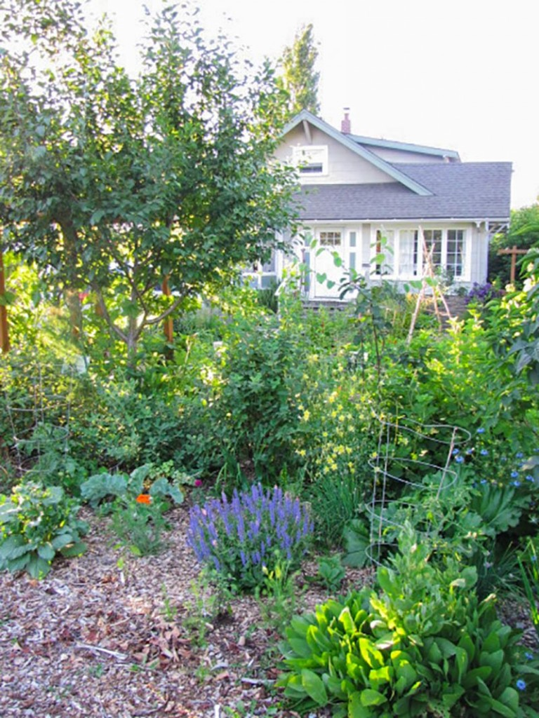 what is permaculture permaculture gardening principles