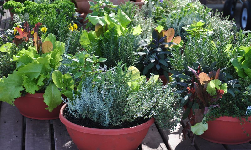 panion planting in containers