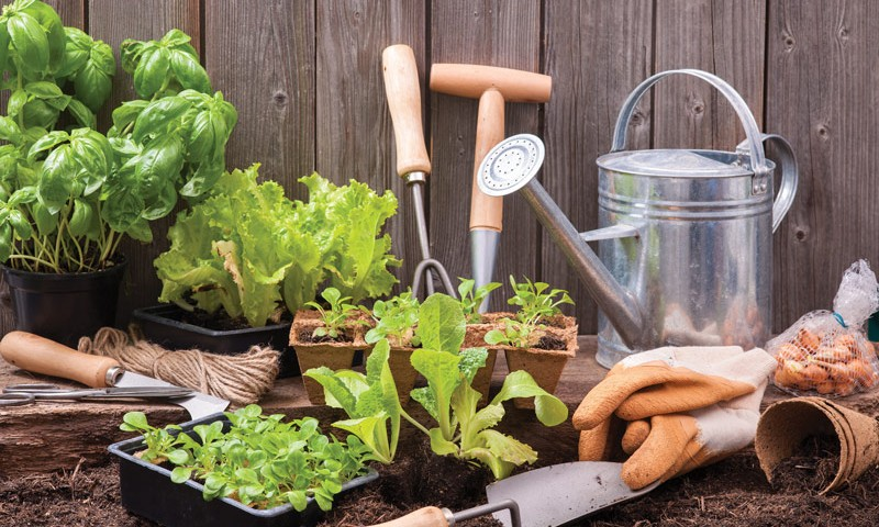 10 Ways To Nurture Your Garden