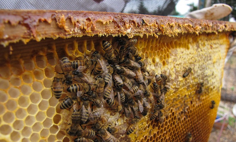 Can I Raise Bees In My Backyard how you can support bees and help bee hives thrive